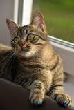 Manikyr för katter royaltyfri fotografi
