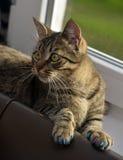 Manikyr för katter arkivfoton