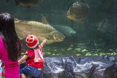 Manila, The Philippines - 19 April 2018 - mom and son in Ocean Park aquarium looking at fishes. Little boy in zoo. Asian kid touches animal through glass stock image