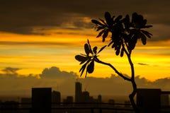 Manila-Sonnenuntergang-Schattenbild stockfotografie