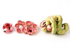 Manila tamarind (Pithecellobium dulce Benth.) Stock Photography