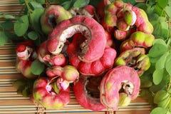 Manila tamarindfrukt royaltyfri foto