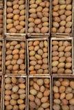 Manilkara sapota Stock Images
