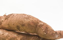 manioc Photos libres de droits