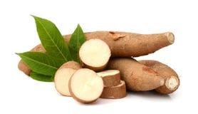 manioc images libres de droits