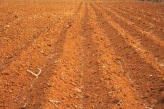 Manioc cultivé par terre  images stock