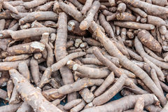 Manioc, tapioca, cassava. A starchy substance in the form of hard white grains, obtained from cassava and used in cooking puddings and other dishes Stock Image