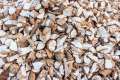 Manioc, tapioca, cassava Royalty Free Stock Photography