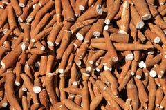 Manioca Fotografia Stock
