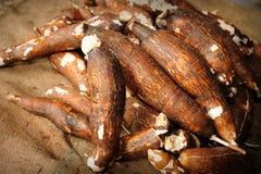Manioca fresca Immagini Stock Libere da Diritti