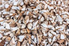 Maniok, tapioca, maniok Royalty-vrije Stock Fotografie