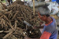 Manioka-Verarbeitung Stockfotos