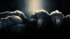Manipulação da foto de Digitas dos elefantes em Sri Lanka Imagens de Stock Royalty Free