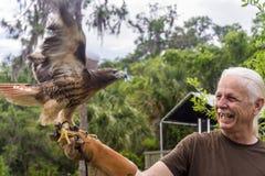 Manipulateur d'oiseau avec le faucon coupé la queue par rouge Photos libres de droits