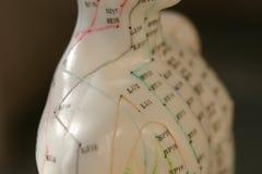 Maniquí de la acupuntura imagenes de archivo
