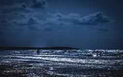 Manis идя к плавать под лунным светом стоковые фотографии rf