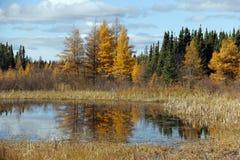 Manitoba spadek Zdjęcia Royalty Free