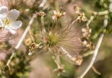 Manitou Colorado Wispy plant. A wispy plant in Manitou Springs, Colorado Royalty Free Stock Photo