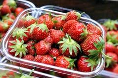 Maniveau de fraises organiques photographie stock
