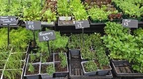 Maniveaux de jeunes plantes à vendre à un marché d'agriculteurs Images libres de droits