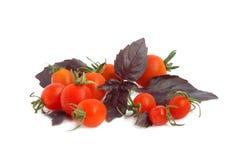 Manjericão e tomates Foto de Stock Royalty Free