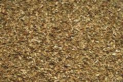 Manjericão secada especiaria. Foto de Stock Royalty Free