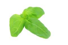 Manjericão verde Foto de Stock