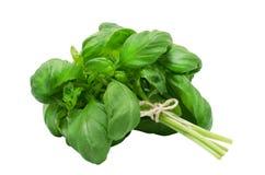 Manjericão verde fresca Fotografia de Stock Royalty Free
