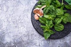 Manjericão verde fresca Foto de Stock Royalty Free