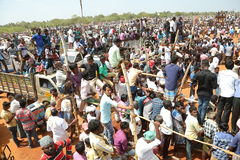 Manju virattu festival. 12 feb 2017 tamilnadu INDIA - a bull is being releasedon on the ground and the people are watching and ready to catch the bull Royalty Free Stock Photos