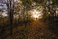 Mankontur i en färgrik skog royaltyfri fotografi