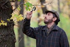 Mankriminalare med ett skägg som studerar trädsidor i höstskog Arkivfoton