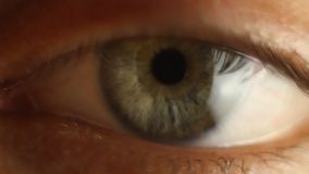 Manlig ögonnärbild för blinka som omkring ser Röd artär på ögonglobmakroen Elevreaktion som ska tändas Mioz och Midriaz arkivfilmer