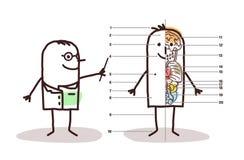 Manlig anatomikurs för tecknad film royaltyfri illustrationer