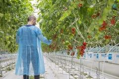 Manlig arbetare i växthus Royaltyfri Foto