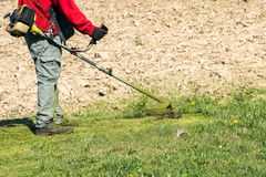 Manlig arbetare med gräsklippningsmaskinen för beskärare för gräsmatta för rad för makthjälpmedel Fotografering för Bildbyråer