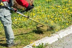 Manlig arbetare med gräsklippningsmaskinen för beskärare för gräsmatta för rad för makthjälpmedel Arkivfoto