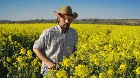 Manlig bonde i kultiverat jordbruks- fält för oljefrörapsfrö som undersöker och kontrollerar tillväxten av växter