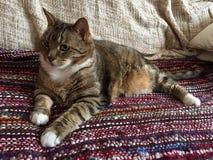Manlig diabetisk pensionär Cat Model Resting Arkivfoton