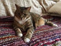 Manlig diabetisk pensionär Cat Model Resting Royaltyfria Foton