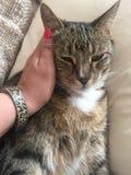 Manlig diabetisk pensionär Cat Model Resting Arkivbilder