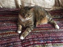 Manlig diabetisk pensionär Cat Model Resting Royaltyfri Bild