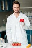 Manlig forskare i det vita laget och handskar som rymmer peppar, medan undersöka grönsaker i labb Royaltyfri Bild