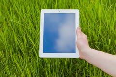 Manlig hand som rymmer den digitala minnestavlan på ett gräsfält Concep foto Royaltyfri Bild