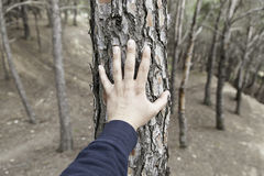 Manlig hand som trycker på ett träd Arkivfoton