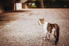 Manlig katt som utomhus sitter med grönt gräs som en bakgrund arkivfoto