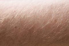 Manlig mänsklig nära övre makromodell för hud och för hår Fotografering för Bildbyråer