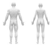 Manlig sikt för baksida för kvinnligmellanrumsvit stock illustrationer