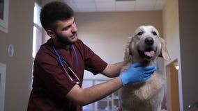 Manlig veterinär- slå hund för Closeup på kliniken stock video