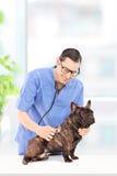 Manlig veterinär som undersöker en hund i sjukhus Royaltyfri Foto